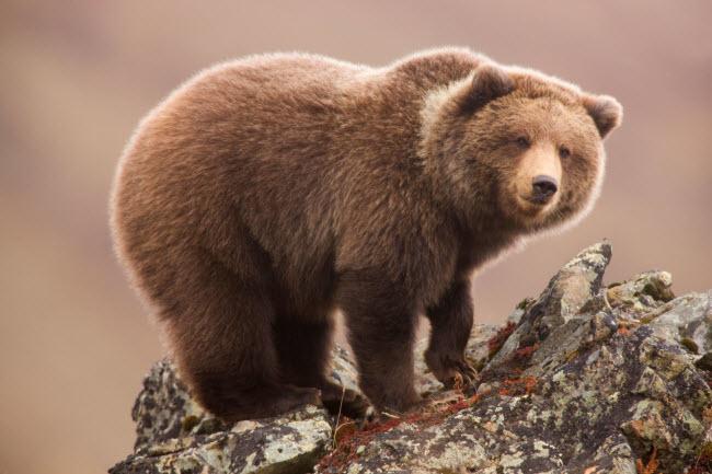 19 bức ảnh minh chứng Alaska là nơi đẹp nhất Trái đất - hình ảnh 4