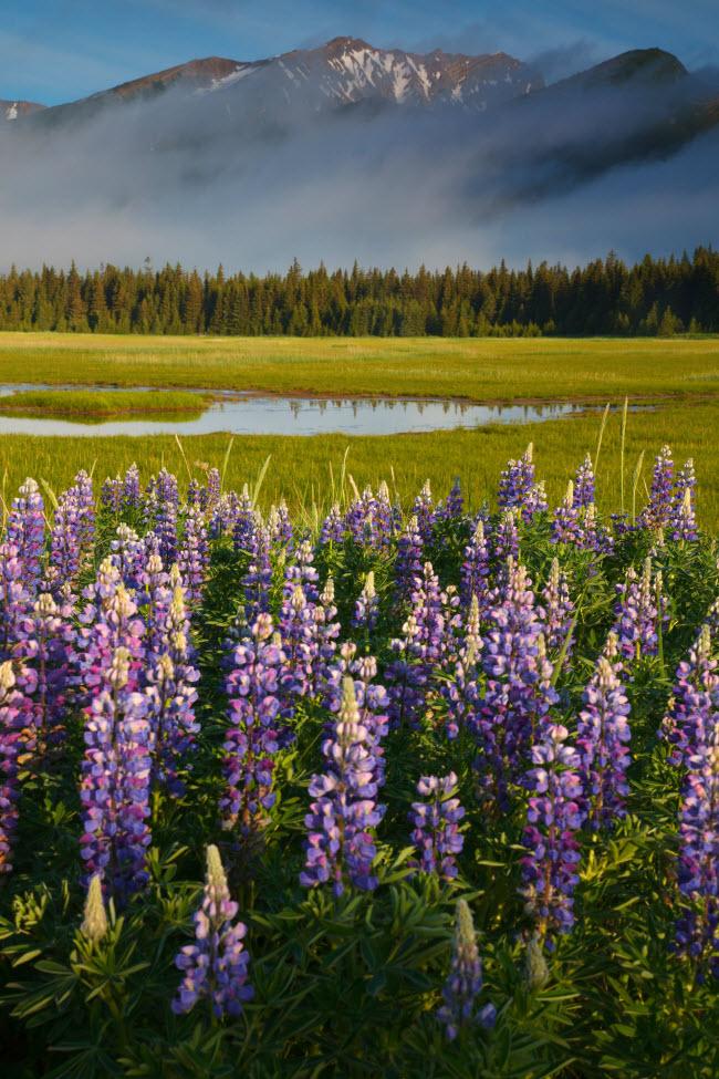 19 bức ảnh minh chứng Alaska là nơi đẹp nhất Trái đất - hình ảnh 9