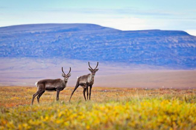 19 bức ảnh minh chứng Alaska là nơi đẹp nhất Trái đất - hình ảnh 10