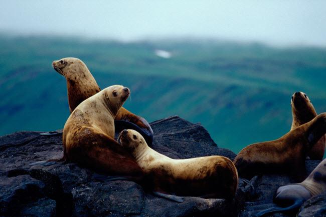 19 bức ảnh minh chứng Alaska là nơi đẹp nhất Trái đất - hình ảnh 19