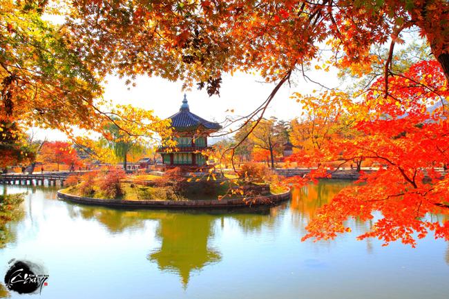 Thu về khắp ngõ ngách Hàn Quốc rồi, xách vali lên và đi thôi! - hình ảnh 12