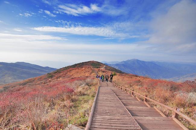 Thu về khắp ngõ ngách Hàn Quốc rồi, xách vali lên và đi thôi! - hình ảnh 3