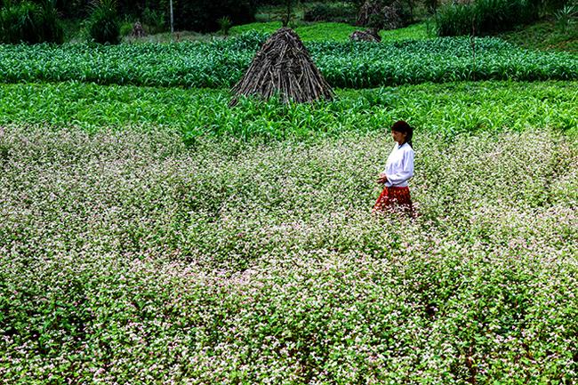 Vi vu Hà Giang ngắm mùa hoa tam giác mạch nở đẹp ngất ngây - hình ảnh 3