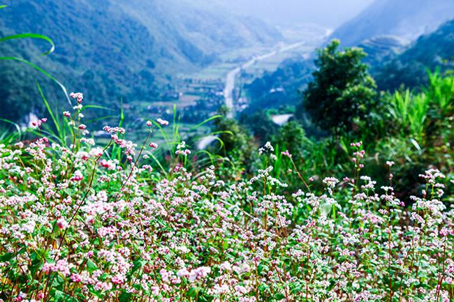Vi vu Hà Giang ngắm mùa hoa tam giác mạch nở đẹp ngất ngây - hình ảnh 6