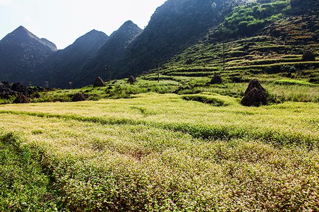 Vi vu Hà Giang ngắm mùa hoa tam giác mạch nở đẹp ngất ngây - hình ảnh 7