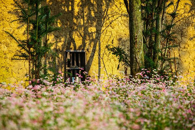 Vi vu Hà Giang ngắm mùa hoa tam giác mạch nở đẹp ngất ngây - hình ảnh 8