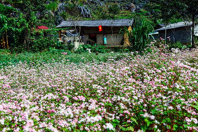 Vi vu Hà Giang ngắm mùa hoa tam giác mạch nở đẹp ngất ngây - hình ảnh 13