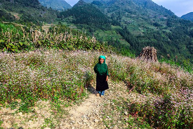 Vi vu Hà Giang ngắm mùa hoa tam giác mạch nở đẹp ngất ngây - hình ảnh 14