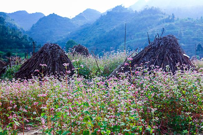 Vi vu Hà Giang ngắm mùa hoa tam giác mạch nở đẹp ngất ngây - hình ảnh 15