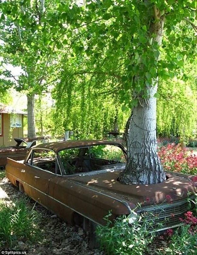 Khi cây trở thành… quái vật đáng sợ - hình ảnh 4