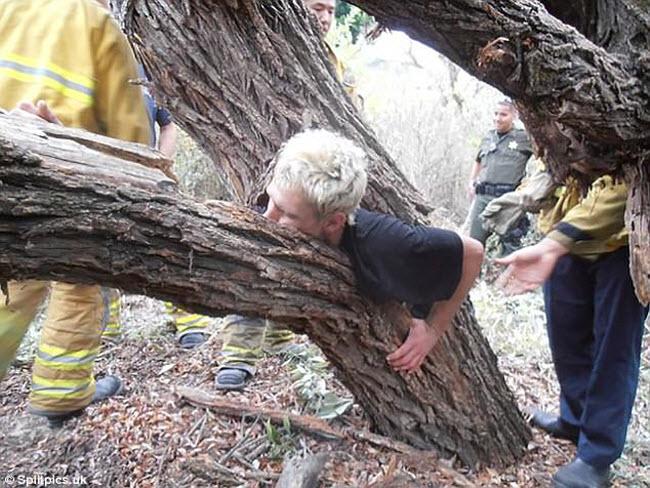 Khi cây trở thành… quái vật đáng sợ - hình ảnh 5
