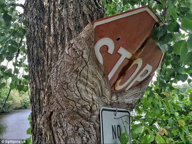 Khi cây trở thành… quái vật đáng sợ - hình ảnh 9