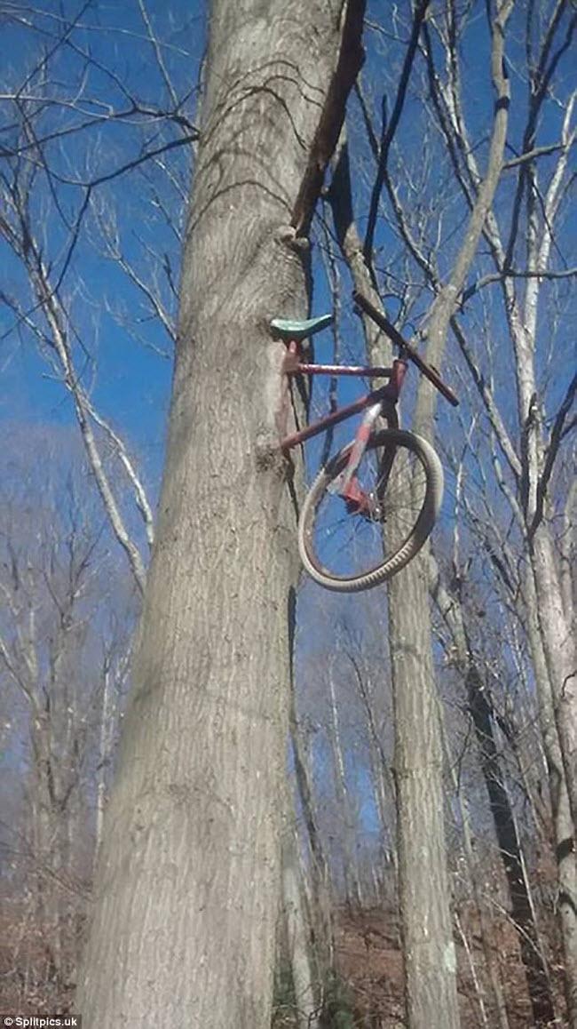 Khi cây trở thành… quái vật đáng sợ - hình ảnh 11