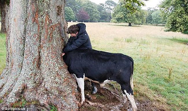 Khi cây trở thành… quái vật đáng sợ - hình ảnh 12