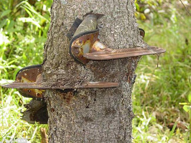 Khi cây trở thành… quái vật đáng sợ - hình ảnh 13