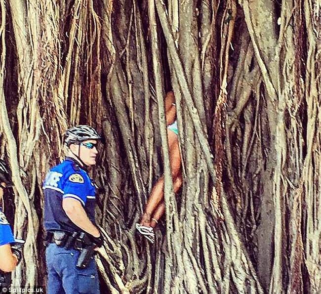 Khi cây trở thành… quái vật đáng sợ - hình ảnh 14
