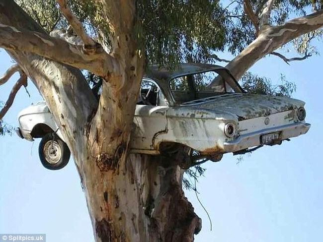 Khi cây trở thành… quái vật đáng sợ - hình ảnh 16