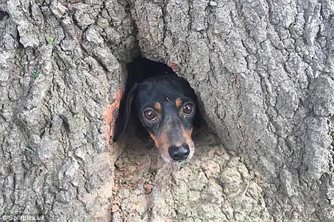 Khi cây trở thành… quái vật đáng sợ - hình ảnh 17