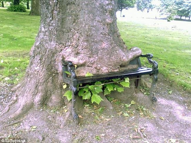 Khi cây trở thành… quái vật đáng sợ - hình ảnh 20