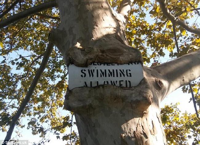 Khi cây trở thành… quái vật đáng sợ - hình ảnh 18