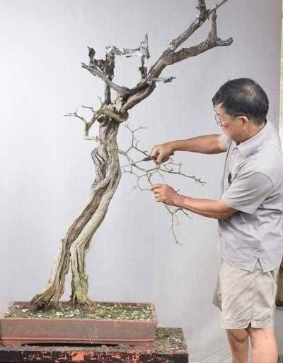 """Cận cảnh: Lão nông Sài Gòn phù phép gốc """"củi"""" thành cây cảnh nửa tỷ - hình ảnh 4"""