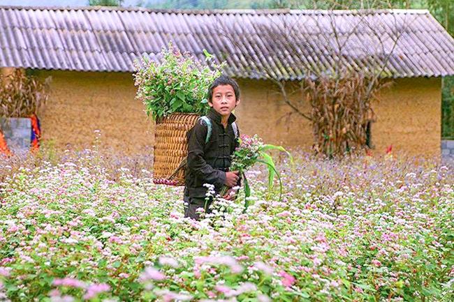 """""""Phát cuồng"""" vẻ đẹp hoa tam giác mạch bung nở trên sườn núi đá Hà Giang - hình ảnh 4"""