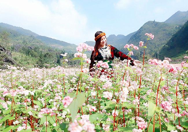 """""""Phát cuồng"""" vẻ đẹp hoa tam giác mạch bung nở trên sườn núi đá Hà Giang - hình ảnh 9"""
