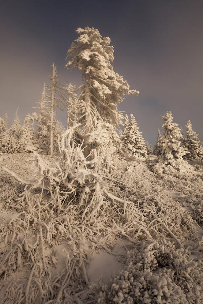 Lạc vào mùa đông kỳ diệu trên núi ở Ba Lan - hình ảnh 18