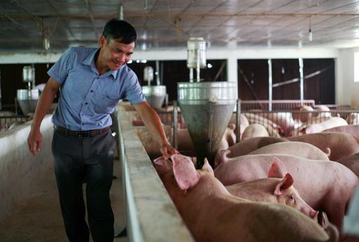 Giá heo hơi hôm nay 1/10: Giá lợn hơi tiếp tục tăng mạnh, Cục Chăn nuôi nói gì? - 2