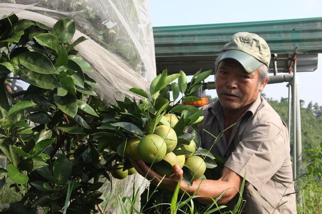 Ngắm vườn cam cho doanh thu 6 tỷ/năm của lão nông 62 tuổi - 1