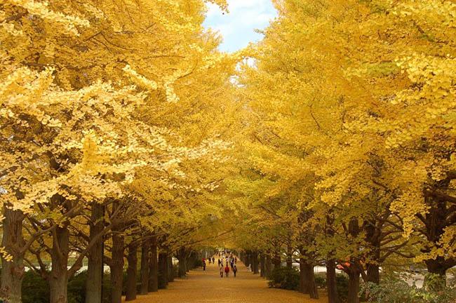 Những con đường mùa thu nổi tiếng tại Hàn Quốc, Nhật Bản - 2