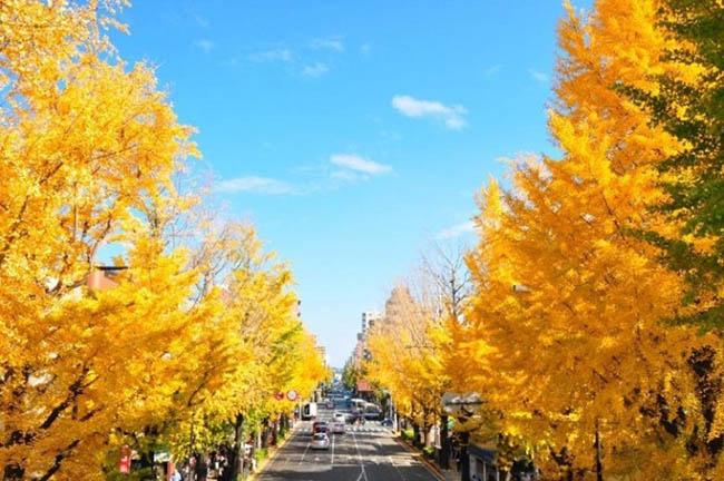 Những con đường mùa thu nổi tiếng tại Hàn Quốc, Nhật Bản - 3