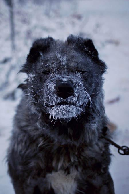 Yakutsk - Ngôi làng lạnh nhất thế giới
