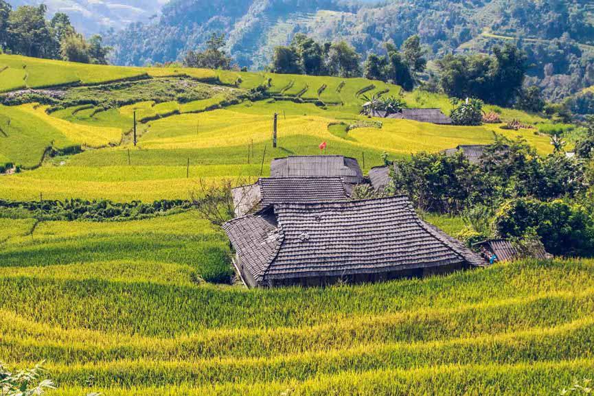 Ngỡ ngàng vẻ đẹp ruộng bậc thang Hoàng Su Phì mùa lúa chín - 11