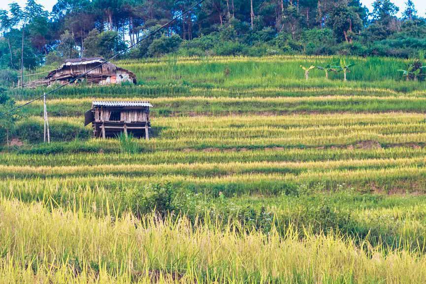Ngỡ ngàng vẻ đẹp ruộng bậc thang Hoàng Su Phì mùa lúa chín - 14