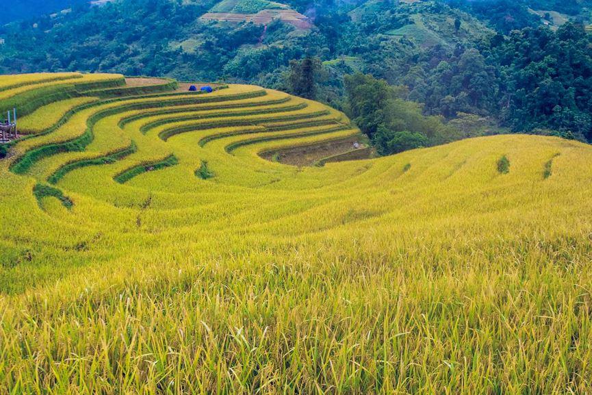 Ngỡ ngàng vẻ đẹp ruộng bậc thang Hoàng Su Phì mùa lúa chín - 4