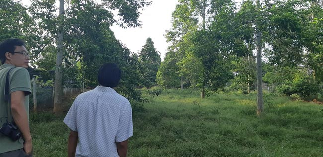 """Một cây dổi đổi cả...cây vàng: Nhiều nhà vườn """"cháy"""" giống - 3"""