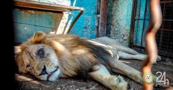 """Bên trong """"vườn thú địa ngục"""", nơi động vật khổ sở chết mòn ở Albania"""