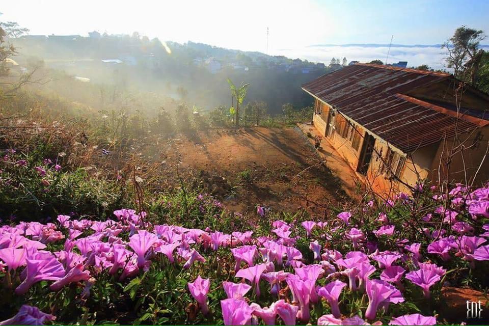 Hình ảnh Đà Lạt đẹp đến nao lòng trong sáng sớm giao mùa khiến ai cũng muốn xách balo lên và đi ngay - 1