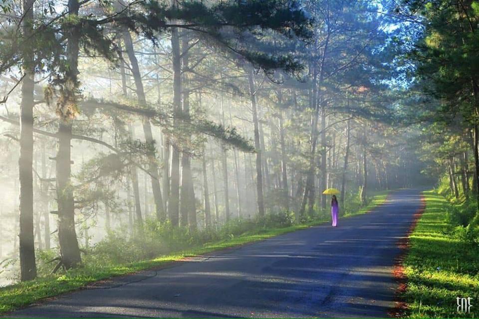 Hình ảnh Đà Lạt đẹp đến nao lòng trong sáng sớm giao mùa khiến ai cũng muốn xách balo lên và đi ngay - 13