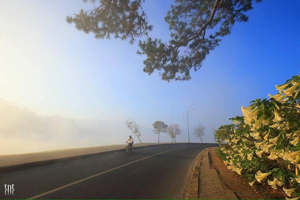 Hình ảnh Đà Lạt đẹp đến nao lòng trong sáng sớm giao mùa khiến ai cũng muốn xách balo lên và đi ngay - 14