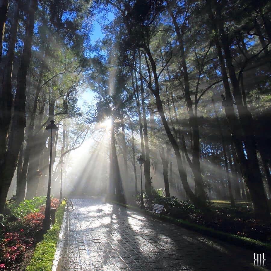 Hình ảnh Đà Lạt đẹp đến nao lòng trong sáng sớm giao mùa khiến ai cũng muốn xách balo lên và đi ngay - 9