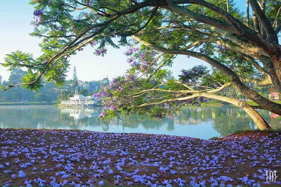 Hình ảnh Đà Lạt đẹp đến nao lòng trong sáng sớm giao mùa khiến ai cũng muốn xách balo lên và đi ngay - 10