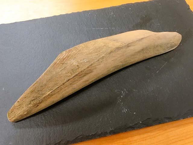 Trông như miếng gỗ nhưng đây lại là nguyên liệu không thể thiếu trong các món ăn Nhật - 1
