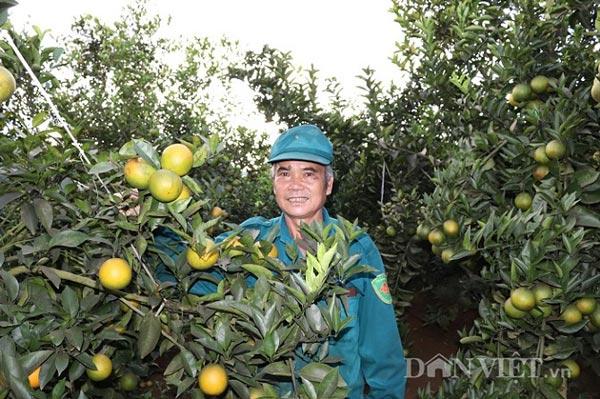 """Vừa trồng cam vừa """"run"""", nào ngờ vụ đầu đã thắng lớn - 1"""