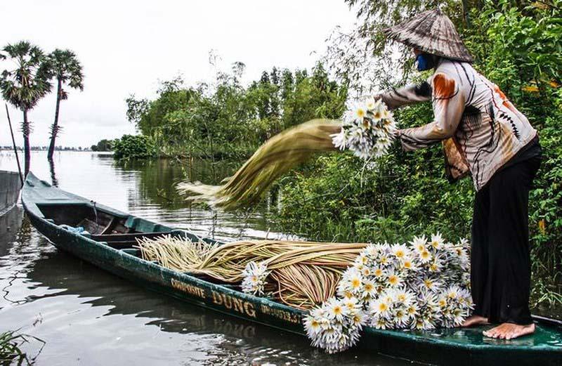 Đẹp nao lòng cây thốt nốt mùa nước nổi - 5