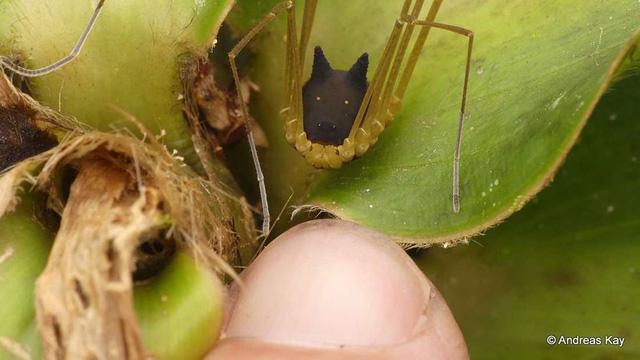 Sinh vật đầu chó, mình nhện như bước ra từ phim giả tưởng - 2