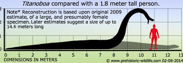 So sánh kích thước mãng xà Titanoboa với một người trưởng thành cao 1,8 mét