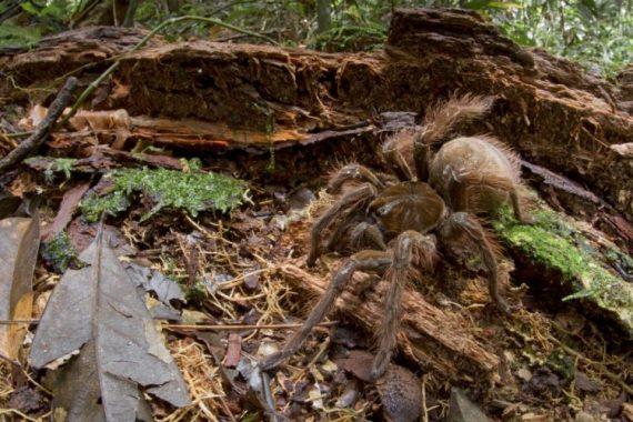 Những bí ẩn trong rừng rậm Amazone đến nay vẫn chưa được giải đáp - 7