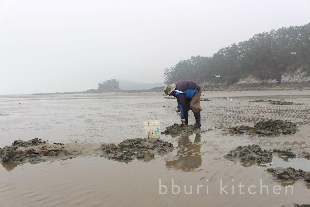 Cá dương vật, món ăn khiến người dân Hàn Quốc tranh nhau mua quanh năm - 1